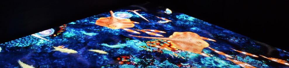 Videovloer voorbeeld met Interactieve weg zwemmende vissen